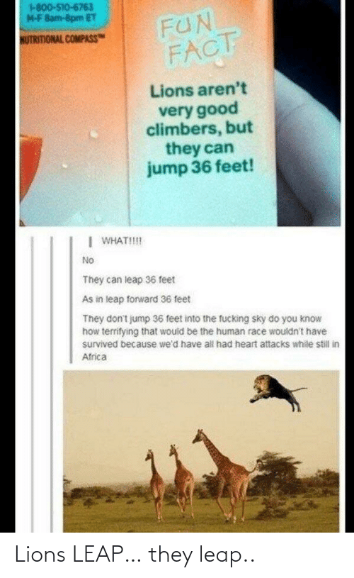 they: Lions LEAP… they leap..