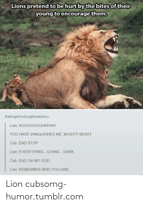 Dad Stop: Lions pretend to be hurt by the bites of their  young to encourage them.  thefingerfuckingfemalefury:  Lion: AGGGGGGGHHHHH  YOU HAVE VANQUISHED ME, MIGHTY BEAST  Cub: DAD STOP  Lion: EVERYTHING.. GOING. DARK  Cub: DAD OH MY GOD  Lion: REMEMBER WHO YOU ARE. Lion cubsomg-humor.tumblr.com