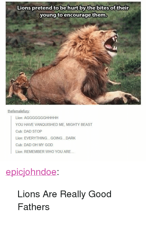 "Dad Stop: Lions pretend to be hurt by thebites of their  young toencourage them.  thefemalefury  Lion: AGGGGGGGHHHHH  YOU HAVE VANQUISHED ME, MIGHTY BEAST  Cub: DAD STOP  Lion: EVERYTHING...GOING...DARK  Cub: DAD OH MY GOD  Lion: REMEMBER WHO YOU ARE.. <p><a href=""https://epicjohndoe.tumblr.com/post/169558977841/lions-are-really-good-fathers"" class=""tumblr_blog"">epicjohndoe</a>:</p>  <blockquote><p>Lions Are Really Good Fathers</p></blockquote>"