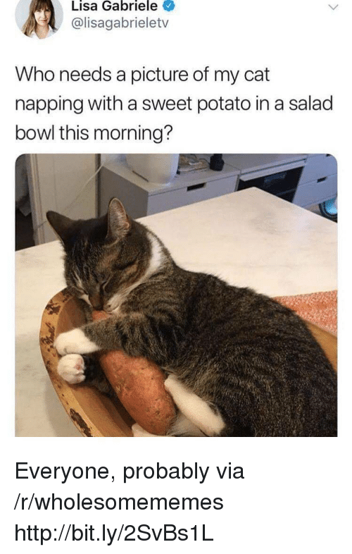 Http, Potato, and A Picture: Lisa Gabriele  @lisagabrieletv  Who needs a picture of my cat  napping with a sweet potato in a salad  bowl this morning? Everyone, probably via /r/wholesomememes http://bit.ly/2SvBs1L