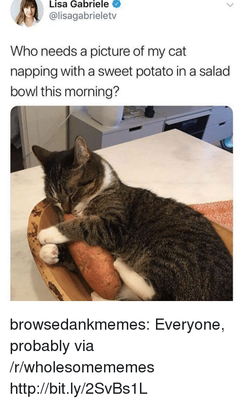 Tumblr, Blog, and Http: Lisa Gabriele  @lisagabrieletv  Who needs a picture of my cat  napping with a sweet potato in a salad  bowl this morning? browsedankmemes:  Everyone, probably via /r/wholesomememes http://bit.ly/2SvBs1L