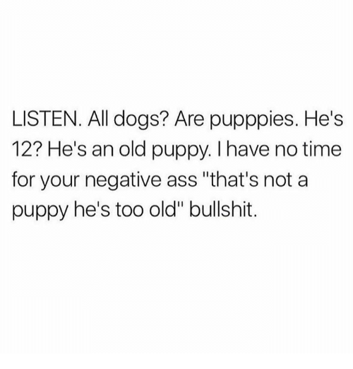 """Ass, Dank, and Dogs: LISTEN. All dogs? Are pupppies. He's  12? He's an old puppy. I have no time  for your negative ass """"that's not a  puppy he's too old"""" bullshit."""
