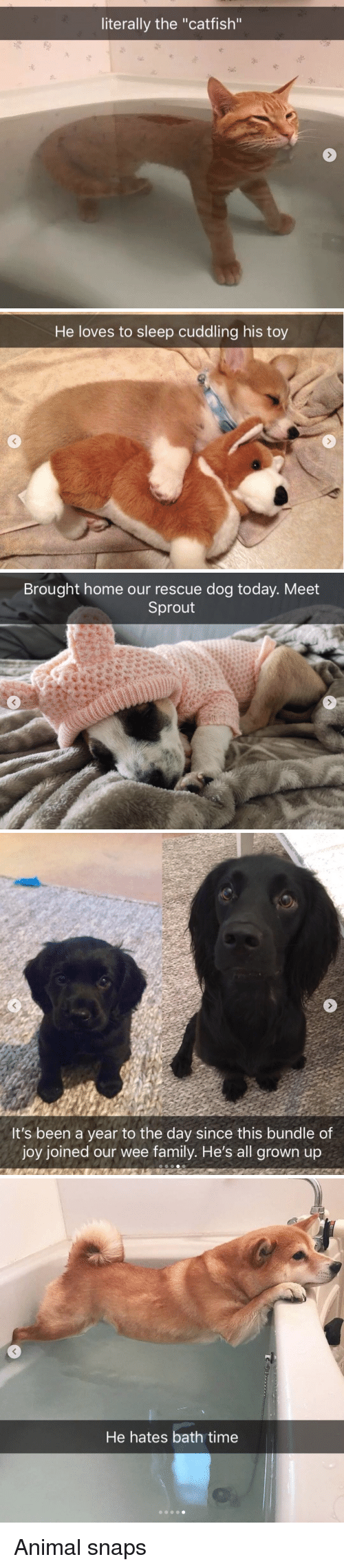 """all grown up: literally the """"catfish""""   He loves to sleep cuddling his toy   Brought home our rescue dog today. Meet  Sprout   It's been a year to the day since this bundle of  joy joined our wee family. He's all grown up   He hates bath time Animal snaps"""