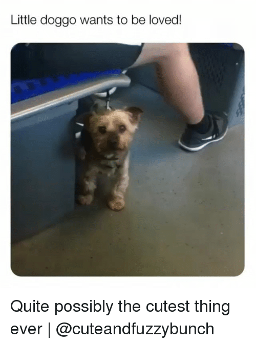 Memes, Quite, and 🤖: Little doggo wants to be loved! Quite possibly the cutest thing ever | @cuteandfuzzybunch