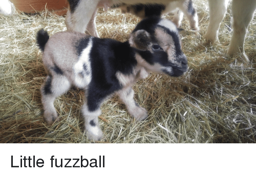 Little: Little fuzzball