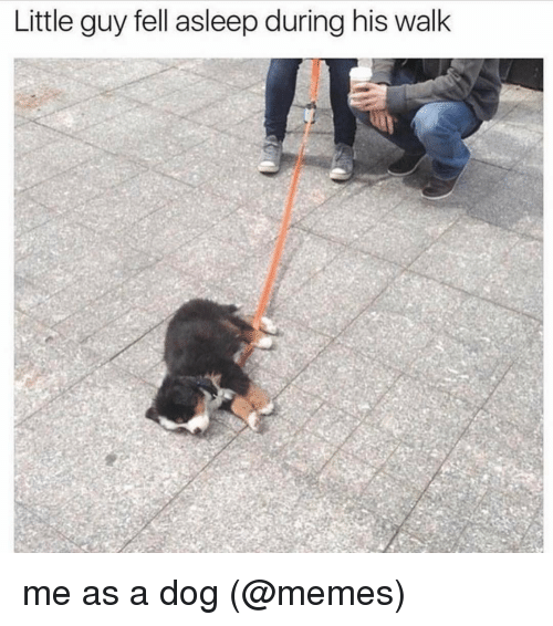 Memes, 🤖, and Walking: Little guy fell asleep during his walk me as a dog (@memes)
