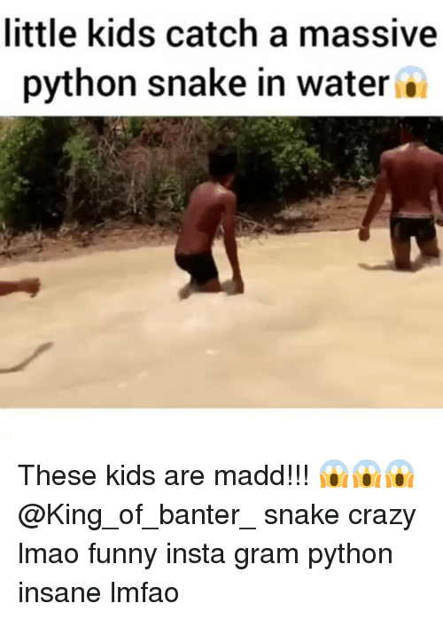 Lmao Funny: little kids catch a massive  python snake in water . These kids are madd!!! 😱😱😱 @King_of_banter_ snake crazy lmao funny insta gram python insane lmfao