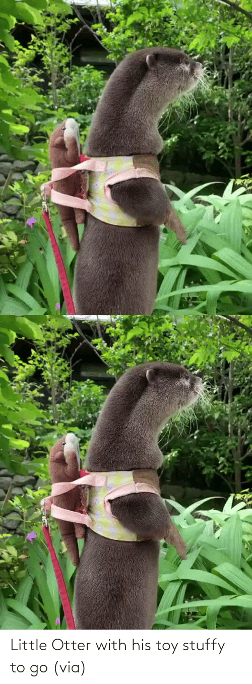 otter: Little Otter with his toy stuffy to go (via)
