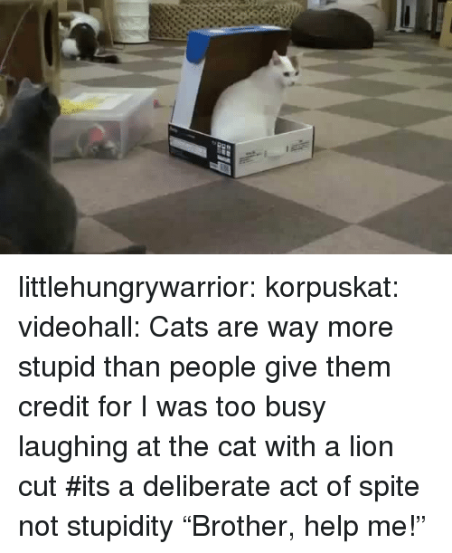 "Cats, Tumblr, and Blog: littlehungrywarrior:  korpuskat:  videohall:  Cats are way more stupid than people give them credit for  I was too busy laughing at the cat with a lion cut  #its a deliberate act of spite not stupidity   ""Brother, help me!"""