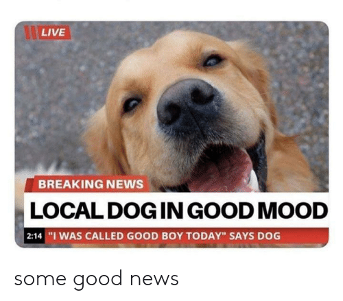 """Mood, News, and Breaking News: LIVE  BREAKING NEWS  LOCAL DOG IN GOOD MOOD  