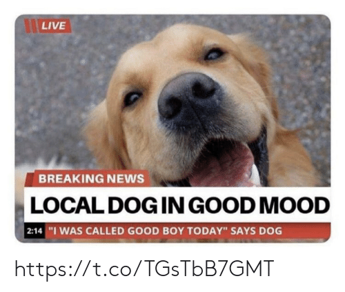 """Memes, Mood, and News: LIVE  BREAKING NEWS  LOCAL DOG IN GOOD MOOD  