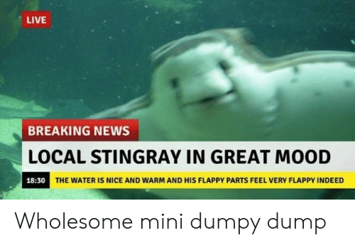Locale: LIVE  BREAKING NEWS  LOCAL STINGRAY IN GREAT MOOD  18:30  THE WATER IS NICE AND WARM AND HIS FLAPPY PARTS FEEL VERY FLAPPY INDEED Wholesome mini dumpy dump