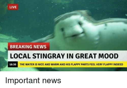 Flappy: LIVE  BREAKING NEWS  OCAL STINGRAY IN GREAT MOOD  18:30  THE WATER IS NICE AND WARM AND HIS FLAPPY PARTS FEEL VERY FLAPPY INDEED <p>Important news</p>