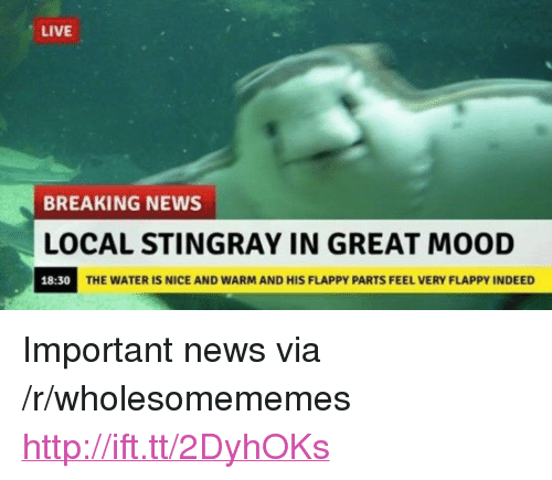 """Flappy: LIVE  BREAKING NEWS  OCAL STINGRAY IN GREAT MOOD  18:30  THE WATER IS NICE AND WARM AND HIS FLAPPY PARTS FEEL VERY FLAPPY INDEED <p>Important news via /r/wholesomememes <a href=""""http://ift.tt/2DyhOKs"""">http://ift.tt/2DyhOKs</a></p>"""
