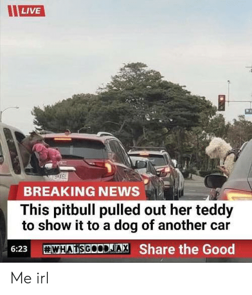 News, Pitbull, and Breaking News: LIVE  BREAKING NEWS  This pitbull pulled out her teddy  to show it to a dog of another car  WHADSGOODJA, Share the Good  6:23 Me irl