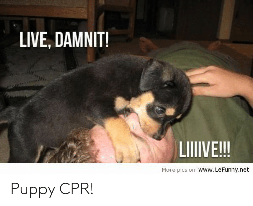 Lefunny: LIVE, DAMNIT!  Jn  LIIVE!!!  More pics on www. LeFunny.net Puppy CPR!