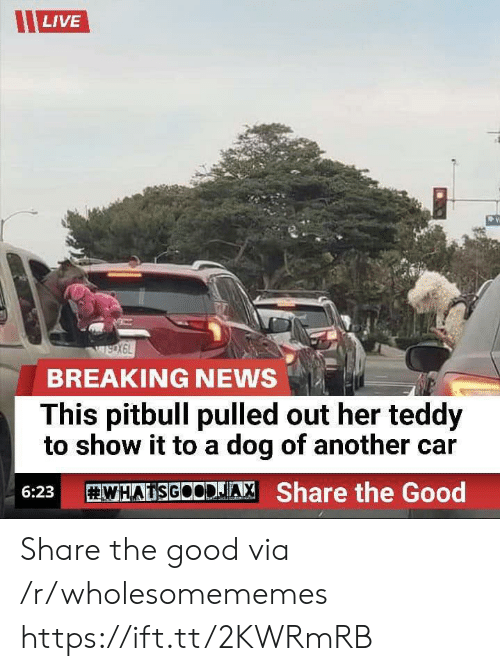 News, Pitbull, and Breaking News: LIVE  wsoX6L  BREAKING NEWS  This pitbull pulled out her teddy  to show it to a dog of another car  WHATSGOCDJA  Share the Good  6:23 Share the good via /r/wholesomememes https://ift.tt/2KWRmRB