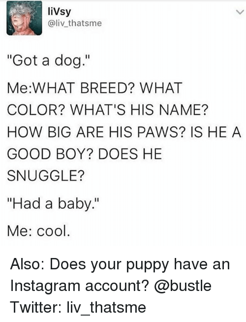 """Instagram, Memes, and Twitter: liVsy  @livthatsme  """"Got a dog.""""  Me:WHAT BREED? WHAT  COLOR? WHAT'S HIS NAME?  HOW BIG ARE HIS PAWS? IS HE A  GOOD BOY? DOES HE  SNUGGLE?  """"Had a baby""""  Me: cool Also: Does your puppy have an Instagram account? @bustle Twitter: liv_thatsme"""