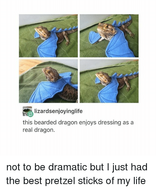 Bearded Dragon: lizardsenjoyinglife  this bearded dragon enjoys dressing as a  real dragon. not to be dramatic but I just had the best pretzel sticks of my life