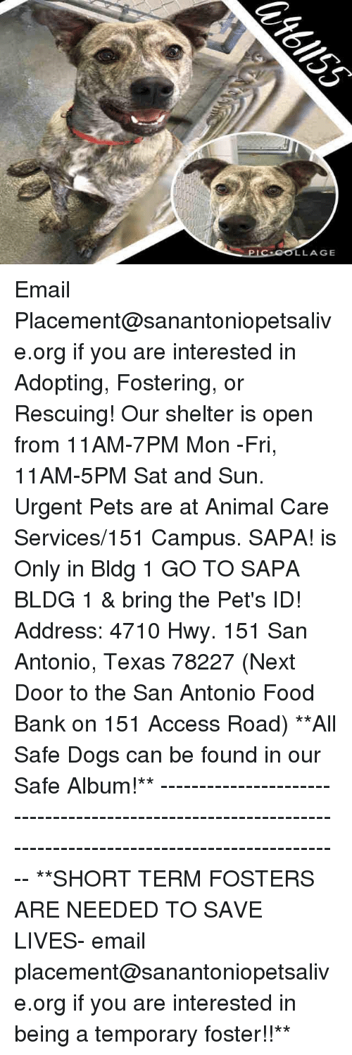 Dogs, Food, and Memes: LLAGE Email Placement@sanantoniopetsalive.org if you are interested in Adopting, Fostering, or Rescuing!  Our shelter is open from 11AM-7PM Mon -Fri, 11AM-5PM Sat and Sun.  Urgent Pets are at Animal Care Services/151 Campus. SAPA! is Only in Bldg 1 GO TO SAPA BLDG 1 & bring the Pet's ID! Address: 4710 Hwy. 151 San Antonio, Texas 78227 (Next Door to the San Antonio Food Bank on 151 Access Road)  **All Safe Dogs can be found in our Safe Album!** ---------------------------------------------------------------------------------------------------------- **SHORT TERM FOSTERS ARE NEEDED TO SAVE LIVES- email placement@sanantoniopetsalive.org if you are interested in being a temporary foster!!**