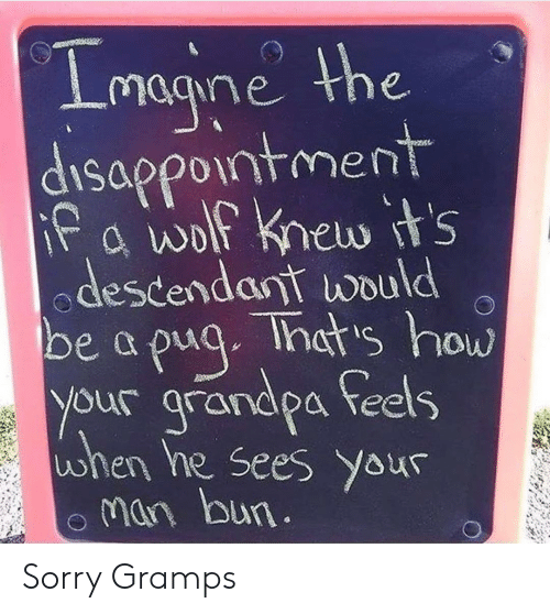 pug: Lmagine the  disappointment  Pa wolf knew t's  descendant would  Ihat's how  be a pug  your grandpa feels  when he sees Your  man bun. Sorry Gramps