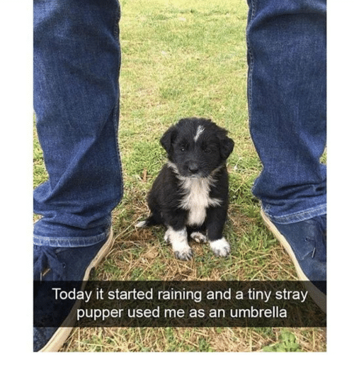 Memes, 🤖, and Tiny: loday it started raining and a tiny stray  pupper used me as an umbrella