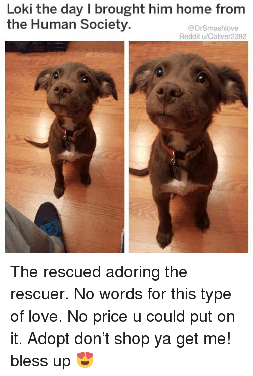 Bless Up, Love, and Memes: Loki the day I brought him home from  the Human Society  @DrSmashlove  Reddit u/Coliver2392 The rescued adoring the rescuer. No words for this type of love. No price u could put on it. Adopt don't shop ya get me! bless up 😍