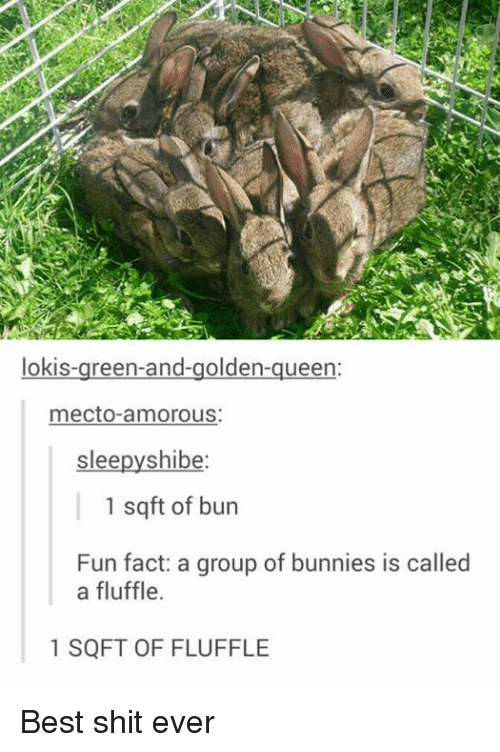 Shibes: lokis-green-and-golden-queen:  mecto-amorous:  slee  shibe  1 sq ft of bun  Fun fact: a group of bunnies is called  a fluffle.  1 SQFT OF FLUFFLE Best shit ever
