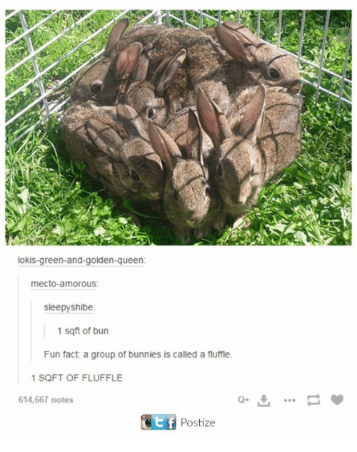 Shibes: lokis green-and-golden-queen:  mecto amorous:  sleepy shibe:  1 sq ft of bun  Fun fact a group of bunnies is called a fluffle.  1 SQFT OF FLUFFLE  614,667 notes  Kit f  Postize