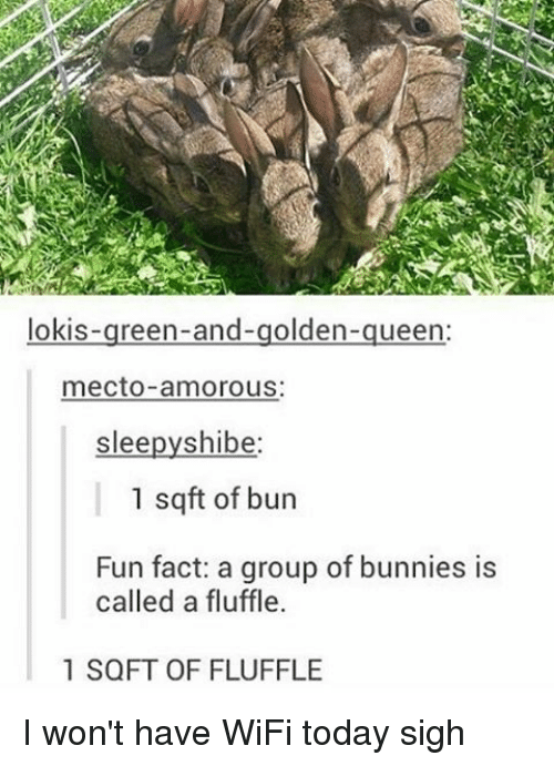 Shibes: lokis  reen-and-golden  ueen  mecto amorous:  slee  shibe  1 sq ft of bun  Fun fact: a group of bunnies is  called a fluffle.  1 SQFT OF FLUFFLE I won't have WiFi today sigh