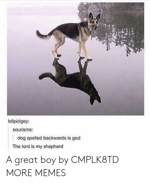 Dank, God, and Memes: lolipidgey:  sourisms:  dog spelled backwards is god  The lord is my shepherd A great boy by CMPLK8TD MORE MEMES