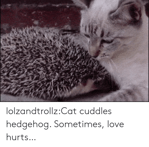 Hedgehog: lolzandtrollz:Cat cuddles hedgehog. Sometimes, love hurts…