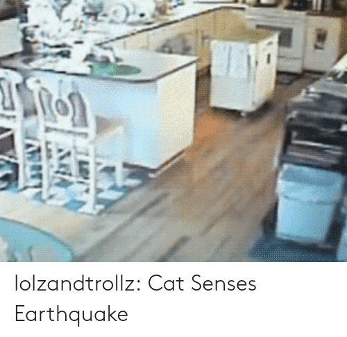 Tumblr, Blog, and Earthquake: lolzandtrollz:  Cat Senses Earthquake