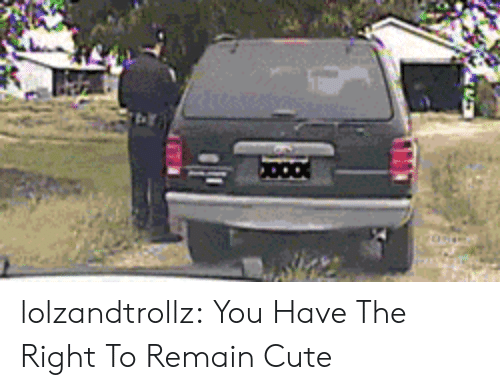 Cute, Tumblr, and Blog: lolzandtrollz:  You Have The Right To Remain Cute