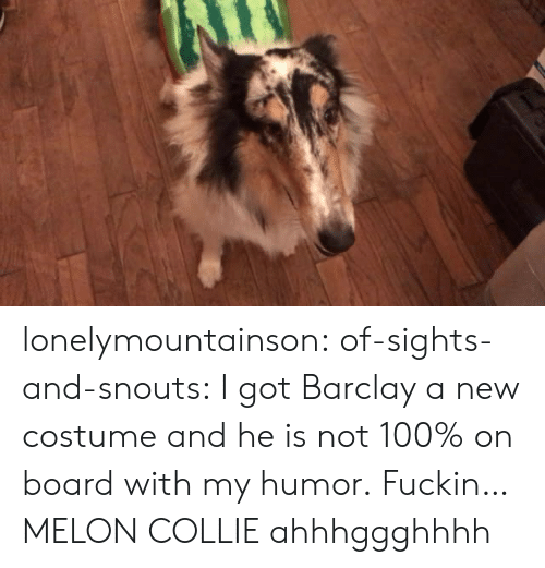 Sights: lonelymountainson:  of-sights-and-snouts:  I got Barclay a new costume and he is not 100% on board with my humor.  Fuckin…MELON COLLIE ahhhggghhhh