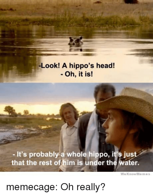 hippos: -Look! A hippo's head!  - Oh, it is!  - It's probably a whole hippo, it's just  that the rest offhim is under the water.  WeKnowMemes memecage:  Oh really?