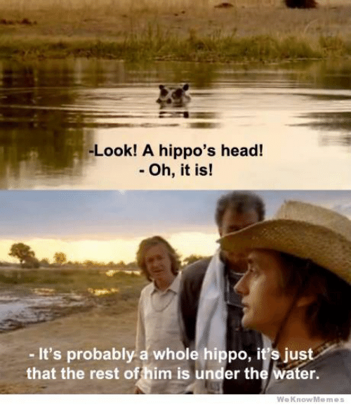 Weknowmemes: -Look! A hippo's head!  - Oh, it is!  - It's probably a whole hippo, it's just  that the rest offhim is under the water.  WeKnowMemes