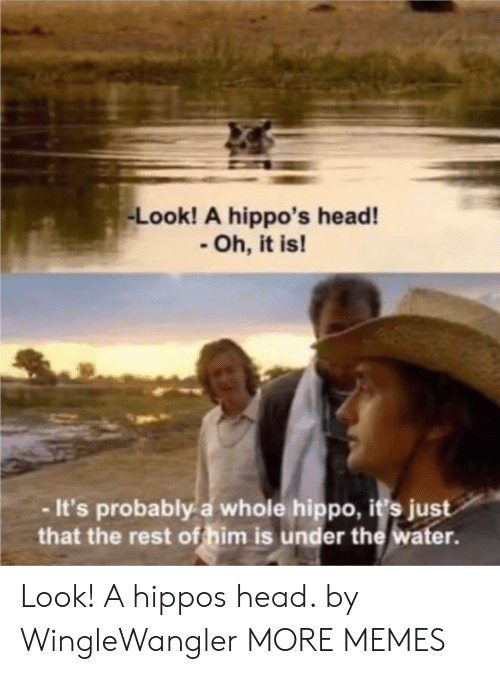hippo: Look! A hippo's head!  Oh, it is!  -It's probably a whole hippo, i's just  that the rest of him is under the water. Look! A hippos head. by WingleWangler MORE MEMES