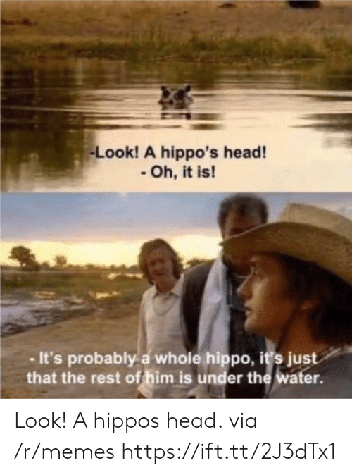 hippo: Look! A hippo's head!  Oh, it is!  -It's probably a whole hippo, i's just  that the rest of him is under the water. Look! A hippos head. via /r/memes https://ift.tt/2J3dTx1