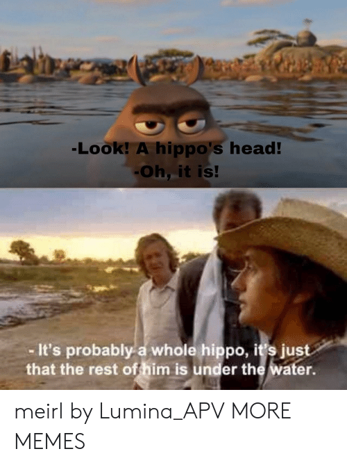 hippo: Look! A hippo's head  Oh, it is!  It's probably a whole hippo, it's just  that the rest of him is under the water meirl by Lumina_APV MORE MEMES