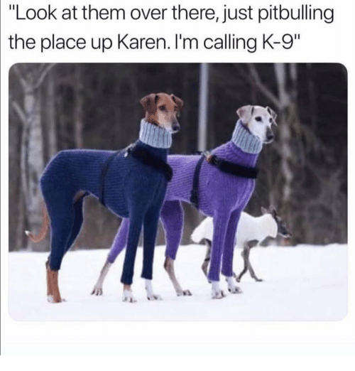 "Funny, Them, and Calling: |""Look  at them over there, just pitbulling  the place up Karen. I'm calling K-9"""