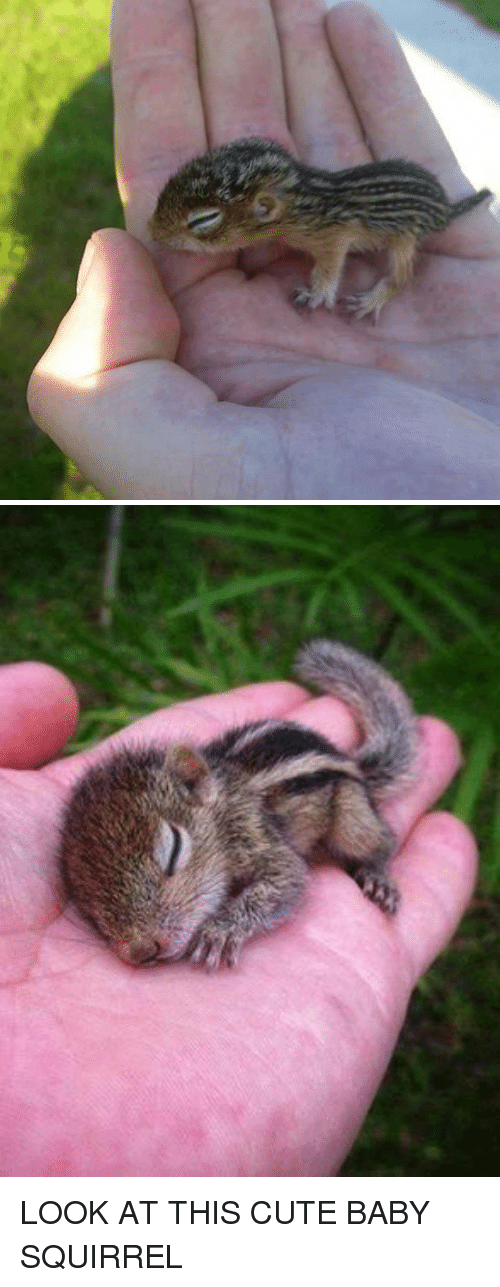 Funny, Squirrel, and Cute Baby: LOOK AT THIS CUTE BABY SQUIRREL