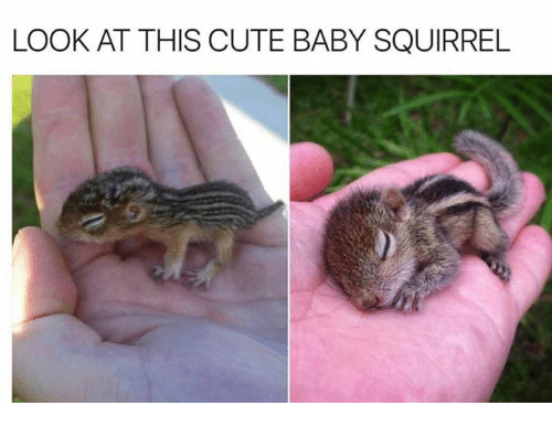 Cute, Memes, and Squirrel: LOOK AT THIS CUTE BABY SQUIRREL