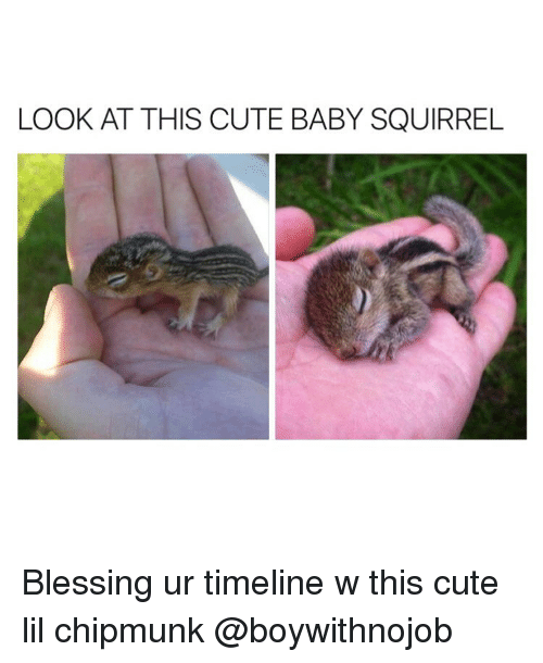 Blessed, Cute, and Squirrel: LOOK AT THIS CUTE BABY SQUIRREL Blessing ur timeline w this cute lil chipmunk @boywithnojob