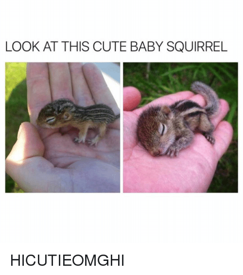 Cute, Squirrel, and Girl Memes: LOOK AT THIS CUTE BABY SQUIRREL HICUTIEOMGHI