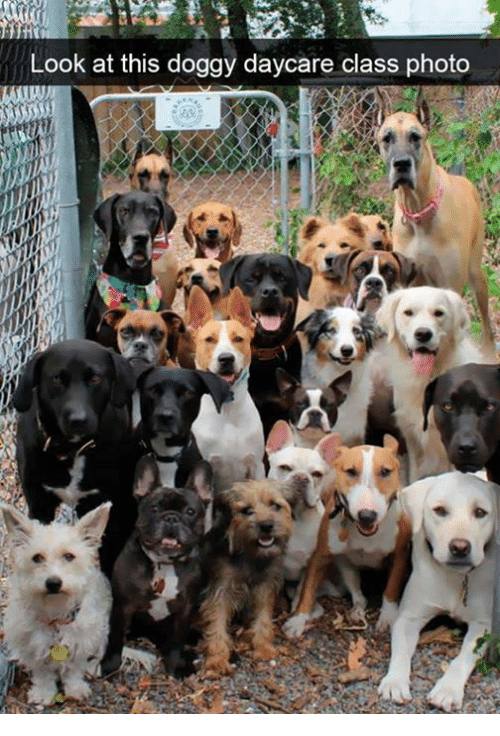 Class, Photo, and Look: Look at this doggy daycare class photo