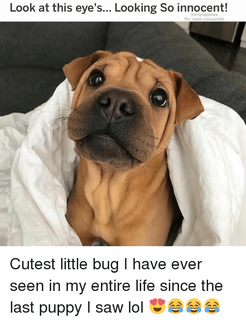 Life, Lol, and Memes: Look at this eye's... Looking So innocent!  @DrSmashlove  Pic: reddit u/piyush526 Cutest little bug I have ever seen in my entire life since the last puppy I saw lol 😍😂😂😂