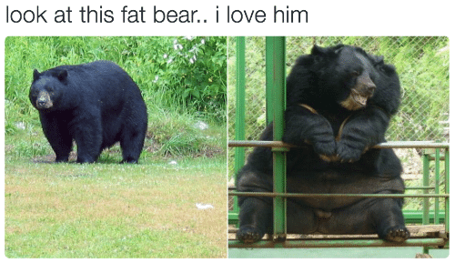 Love, Bear, and Fat: look at this fat bear.. i love him
