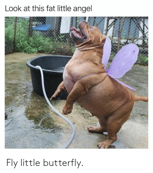 Dank, Angel, and Butterfly: Look at this fat little angel Fly little butterfly.