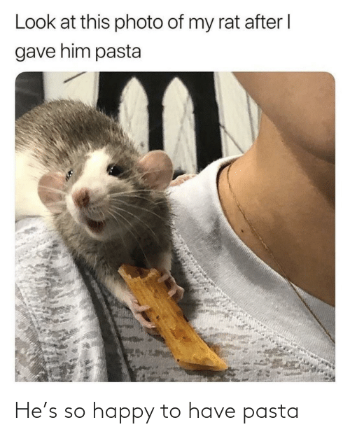 Happy, Pasta, and Rat: Look at this photo of my rat after I  gave him pasta He's so happy to have pasta